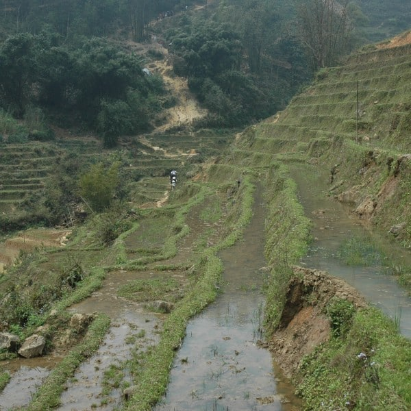 rice paddies near Sapa Vietnam